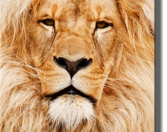 Head of African Lion Picture Made on Stretched Canvas, Wall Art Decor Ready to Hang.