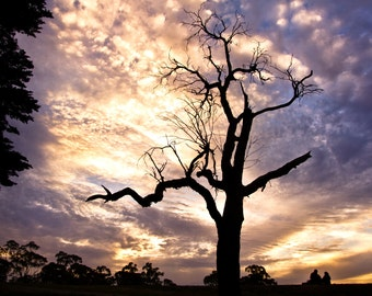 Lovers Tree, sunset, Photography Fine ART print