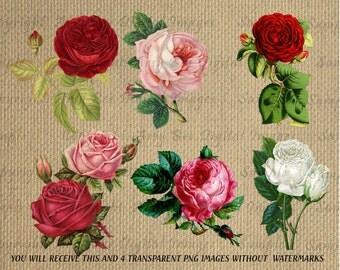 Digital Roses Collage & Decoupage Sheet Vintage Transparent 5 images set Immediate download high resolution PNG Images 300dpi
