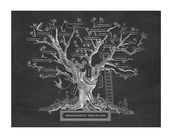 Microbiology Phylogenetic Tree Of Life In Black By