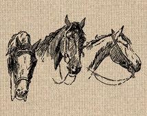 Printable Horse Image Horse Graphics Horse Illustration Horse Print Horse Clipart 300dpi HQ