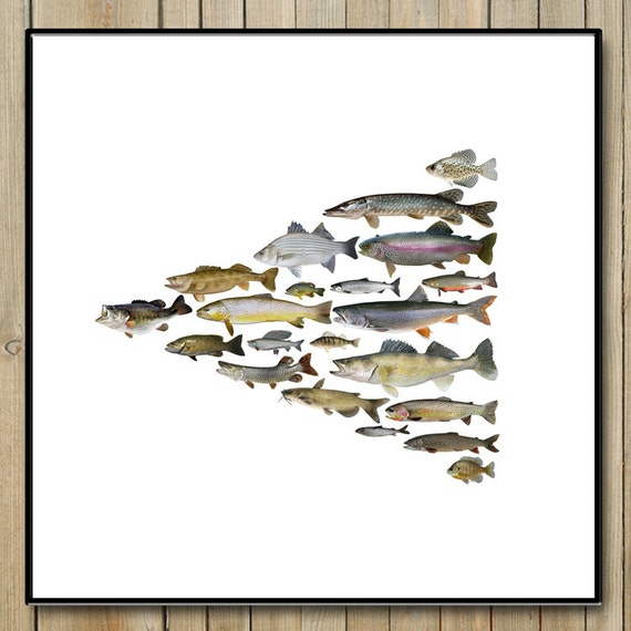 Colorado fish poster 20 x 20 high quality giclee for Colorado fish species