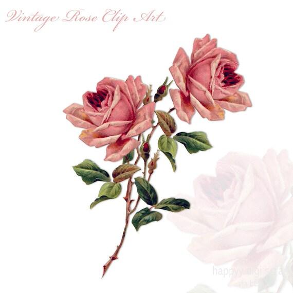 The Vintage Rose 92