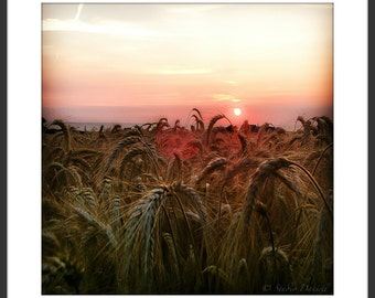 Normandie landscape, sunset, normandy, digital image, landscape, nature, landschap, fine art, wall art,  photography, corn field