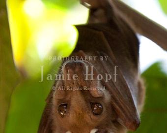 African Epauletted Fruit Bat Photograph