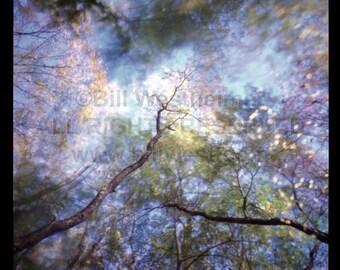 """Digital Pigment Inkjet Print - """"Wald 117"""""""