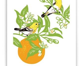 "ART66: Vireos in Orange Tree 8"" x 10"" Art Reproduction"