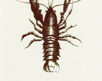 Atlantic Lobster (Limited Edition Print)