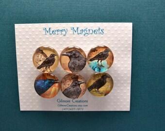 """Set of Magnets   Fridge Magnets  Glass Magnets  """"Ravens"""""""