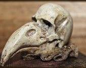 Bird Skull Replica Oddity Home Decor Curiosity Natural History