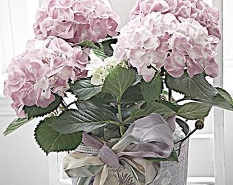 Pink Hydrangeas Floral Art, Shabby Chic Hydrangea Flowers, Romantic Floral Photos, Dreamy Hydrangeas, Lavender Pink Floral Wall Art Prints