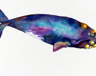 Signed Fine Art Print of my Original Watercolor - Right Whale One - from my Daily Whale Series