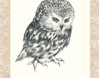 """Saw-Whet Owl 5"""" x 7"""" Card with Envelope"""