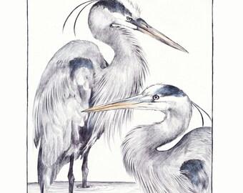 "8""x10"" Print of original illustration ""Blue Herons"""