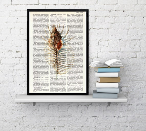 Art Print , Book print Spiky Shell Original  Vintage Design sea shell wall decor, art wall decor shell, sealife art print, beach art BPSL103