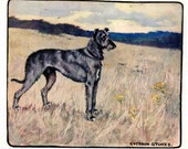 Scottish Deerhound Antique Dog Print Vernon Stokes 1906 Book Plate Gorgeous