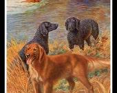 Retriever Hunting Dog Print Edward Herbert Miner 1930s Golden Retriever Curly Coated Retriever