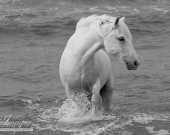 Sea Horse Turning - Fine Art Horse Photograph - Horse - Ocean - Camargue - Fine Art Print