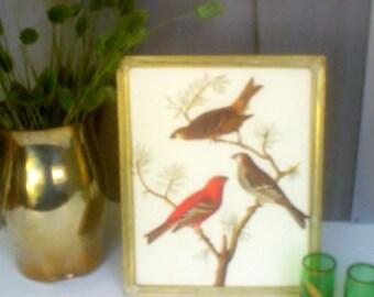 Vintage Audubon Framed Bookplate / Pine Grosbeak Print / White Washed  Gold Tone Framed Bird Print
