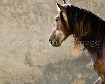 FRESCO - Andalusian Horse  Fine Art Print - Wall decor, Equine Art, Horse photography