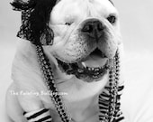 MATERIAL GIRL BULLDOG, Rock Star, Dress up, English Bulldog Photo, Madonna Lace Headband, Stylish Bulldog Photo, Cute Dog Photo