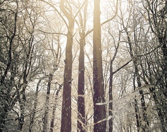 Winter Forest, trees in snowy forest, trees in winter, winter trio, white nature