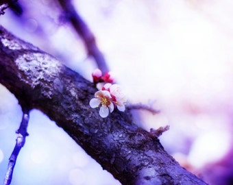 Fine Art Photography Print, Dreamy Purple Tree Blossoms, Dreamy Botanical Home Decor Wall Art- Majestic Blooms
