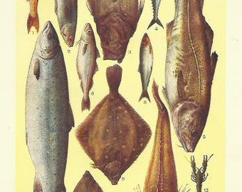 Fish Cod Salmon Crayfish John Dory 1910 Kitchen Print Decor Antique Cook Print Beeton Cookery Food print Wall Art Home Decor Vintage Print