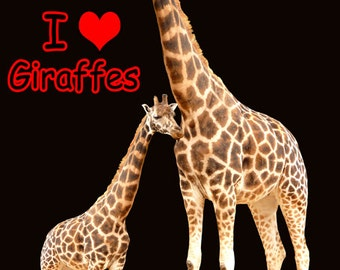 I Love Giraffes Fridge Magnet 7cm by 4.5cm