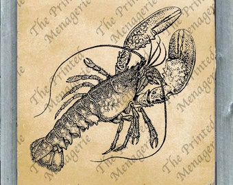 Lobster Digital Download for collages fabric iron on T-shirt transfer burlap pillows Vintage image Instant printable seashore Clip Art
