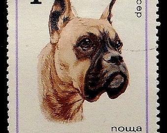 Boxer Dog -Handmade Framed Postage Stamp Art 17926