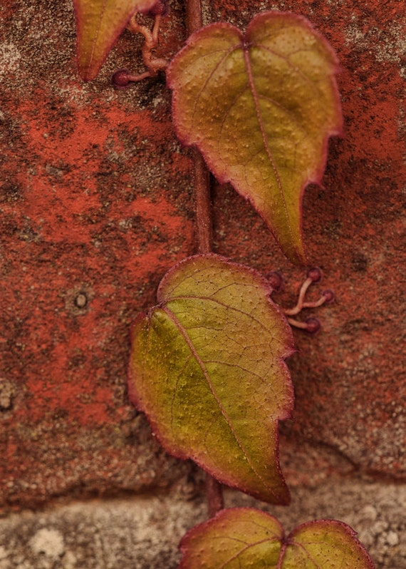 Autumn Decor, Fall Photography, Red, Green, Orange, Autumn Photography, Fall Nature Photograph, 5x7, Rustic Wall Decor, Fine Art Photography