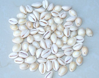 Small Natural Sea Shell - Cowrie Shell - Money Shell -  Shell Bead  -  Seashell - 12mmx 18mm - 40 Shells