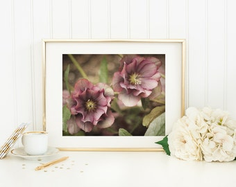 Nature Photography - Pink Hellebore Flower Photo - 5x7 Wall Art - Pink Flowers - Botanical Print - Floral Home Decor - Bathroom Art Print