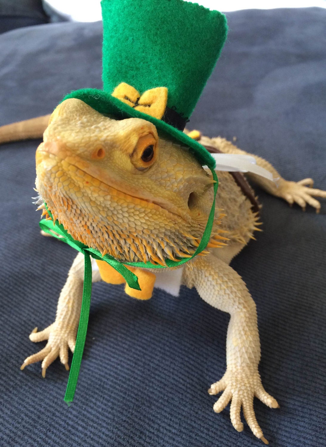 & Cute Bearded Dragon Costumes