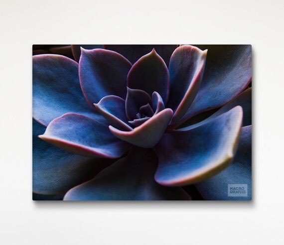 Succulent Plant Wall Art, Macro Photography, Canvas Print, Office Decor, Plant Picture