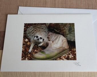 Photography Card of a Cute Meerkat in Devon Handmade by Myself
