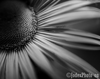 Instant Digital Download Fine Art Black and White Nature Photography 'Sunflower' Printable