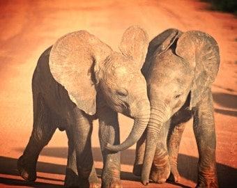 Kenya print - Kenya Photography - Kenya decor - Safari print - Elephant print - Elephant decor - Elephant photo - Baby Elephant print - Art