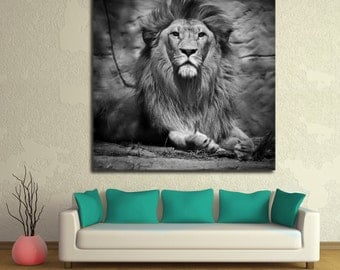 Staring Lion B&W Giclee Print on Canvas. Black and white wildlife photography animal print for home, office wall decoration. King of jungle