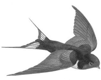 Swallows Temporary Fake Tattoo Bold Body Art Transfer Waterpoof Fancy Dress Swallow Birds