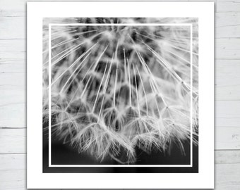 Macro photographie - Dandelion part 3
