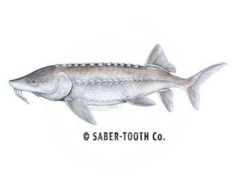 Sturgeon Fish Decal Sticker