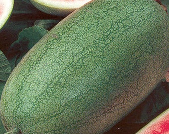 100 Charleston Grey Watermelon Seeds