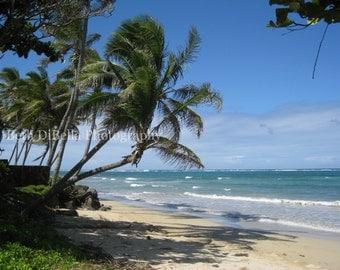 Hawaiian Palm Tree Photo, Set of 5 Blank Photo Notecards