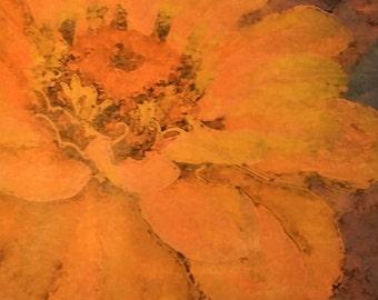 Floral Wall Art, Zinnia Orange, Original Photo Transfer, Size 8.5 square
