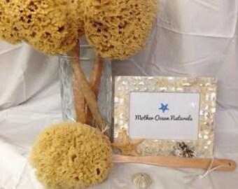 Natural Premium Wool Sea Sponge on a Stick