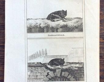 Antique Bat Engraving (c. 1805)