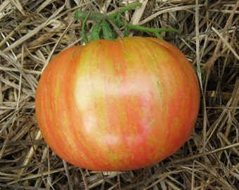 Vintage Wine  Heirloom Tomato Seeds, Naturally Grown in the Pacific NW