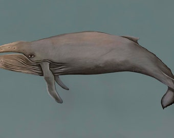 Polly The Humpback Whale, 12.5 X 7 print by Caryn Cast